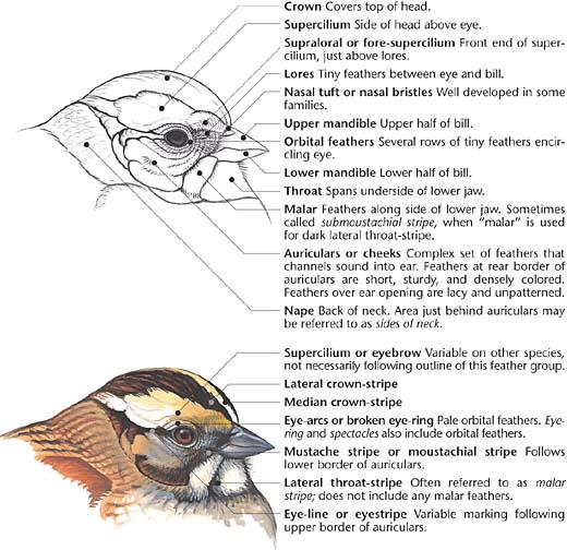 Bird Head Diagram - Electrical Drawing Wiring Diagram •